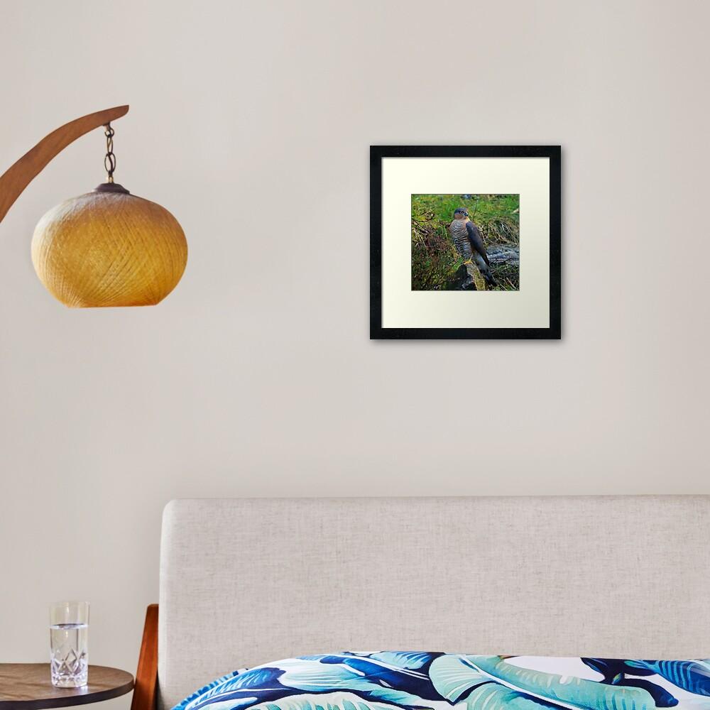 Sparrowhawk #14 Framed Art Print