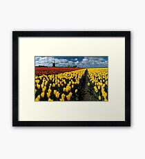 Out In the Tulip Fields Framed Print