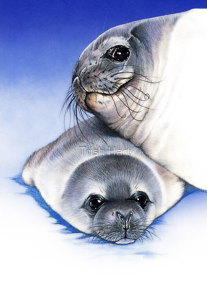 weddell seal and pup by hartpix