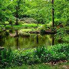 Spring in the Garden - Holden Arboretum by Kathy Weaver