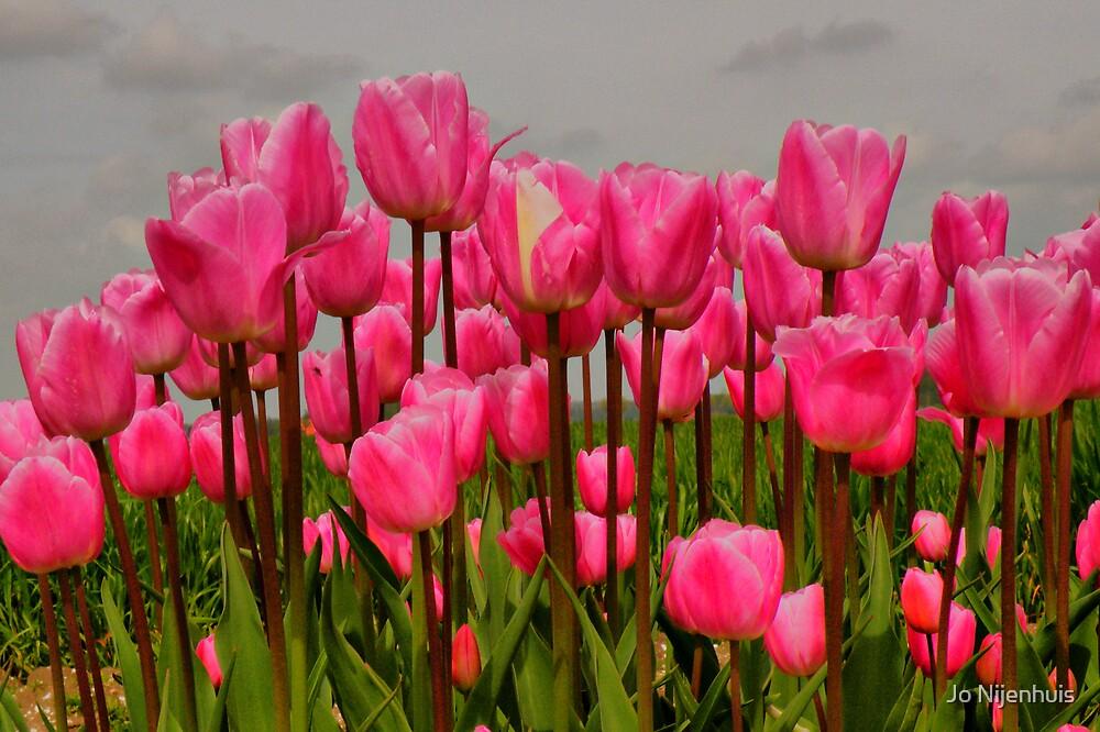 Lovely Pink Tulips on a Grey Day by Jo Nijenhuis