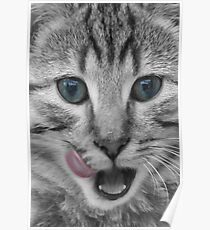 Tabby Cat Licking its Lips Poster