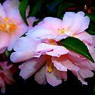 Pink flower  by Virginia McGowan