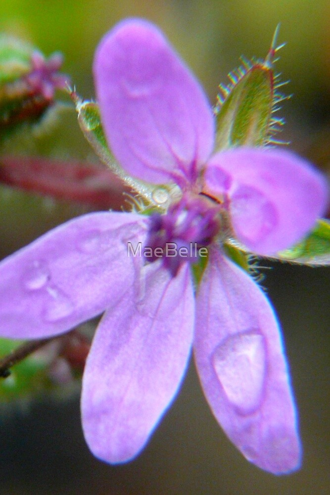 Raindrops Keep Falling On My Petals by MaeBelle