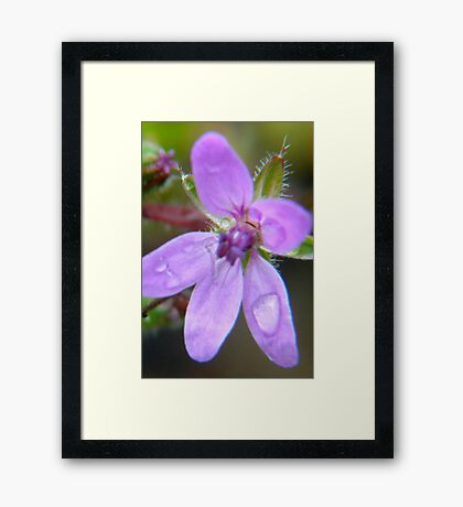 Raindrops Keep Falling On My Petals Framed Print