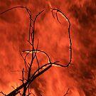 Burning Branch by OzShell