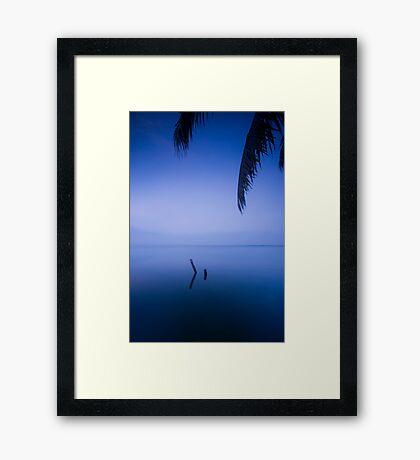 Halycon days Framed Print