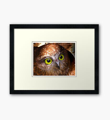 Here's looking at you Babe Framed Print