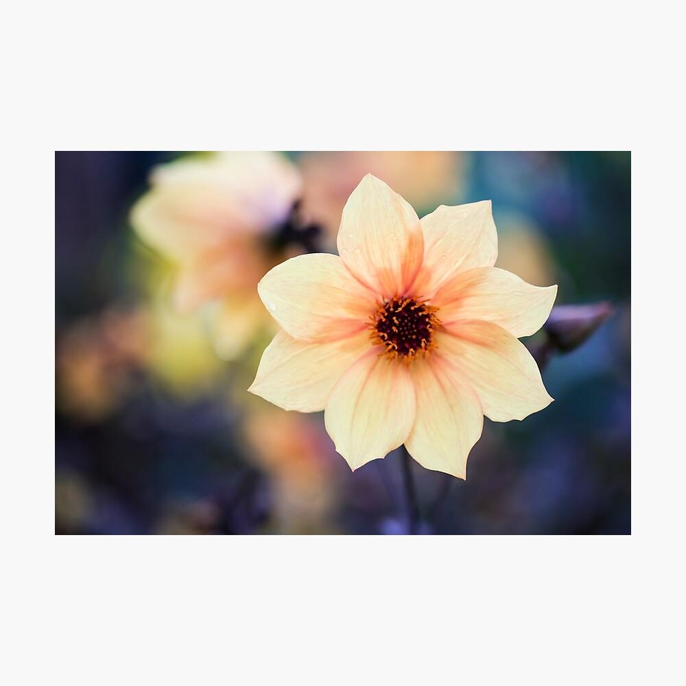Yellow Summer Flower Photographic Print