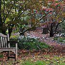 Come Sit Awhile - Mt Wilson NSW Australia by Bev Woodman