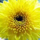I am small but wishing I was the sun by Katarina Kuhar