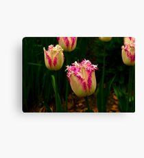 Frilly Tulip (Spring Bulbs) Canvas Print
