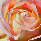 The Rose of Silk by Nancy Stafford