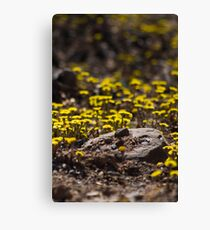 Dandelions In The Woods Canvas Print