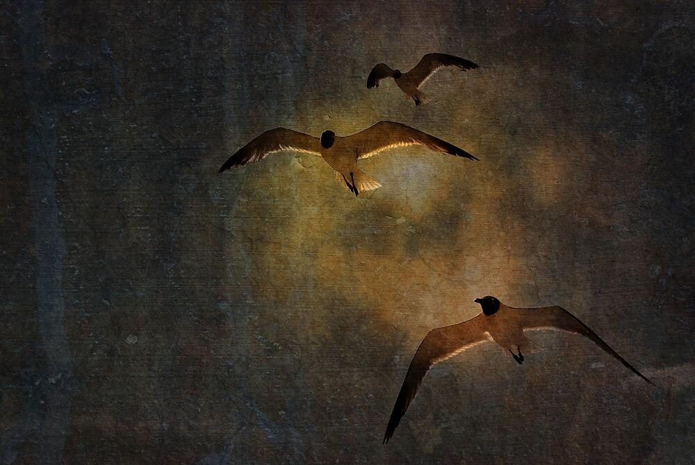 See the Light by Johanne Brunet