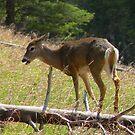 Bambi by Borror