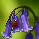 Spring by FraserJ