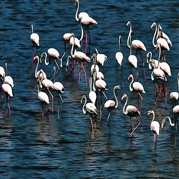 Flamingo Birds In Pink and White On Blue by taiche