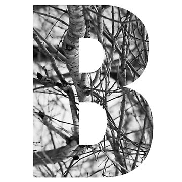 Tree letter B by PCollection