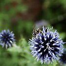 Blue Flower Garden - Nature and Wildlife Original photo graphic design  by VIDDAtees