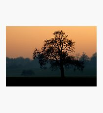 Roost Photographic Print