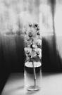 Orchid in a glass vase von Marianna Tankelevich