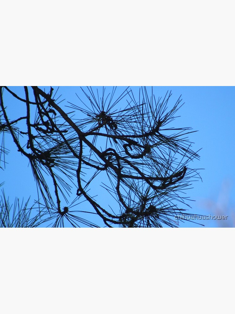 Twisty bare trees in blue skies by chihuahuashower