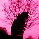 Pink dreams, yet only 9 lives by Sophie MacLeod