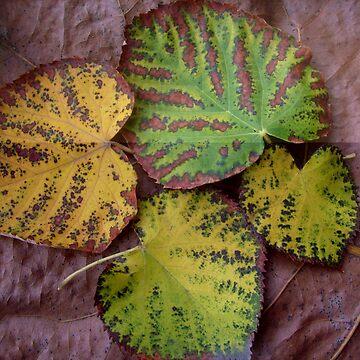 artist--autumn... by beleja