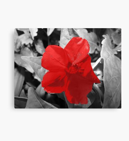 Selective Colored  Red Flower Canvas Print