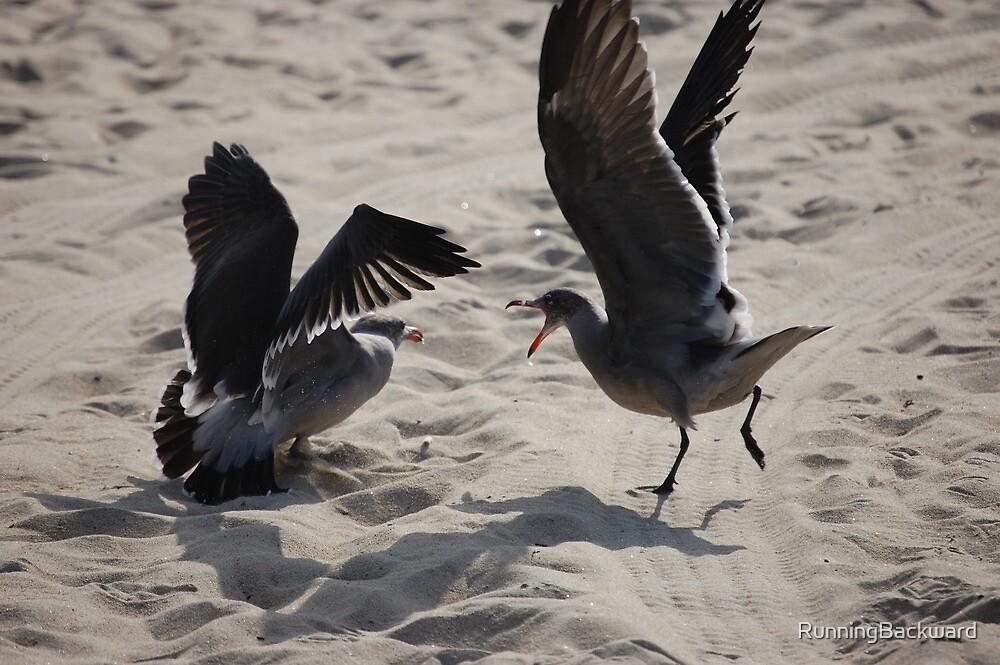 Squawking seagulls by Amanda Huggins