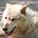 White Wolf by AnnDixon
