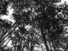 Tree Canopy, Bute Park, Cardiff by Artberry