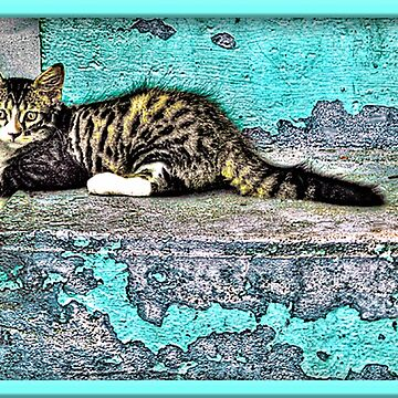 Kitty On The Front Steps by glink