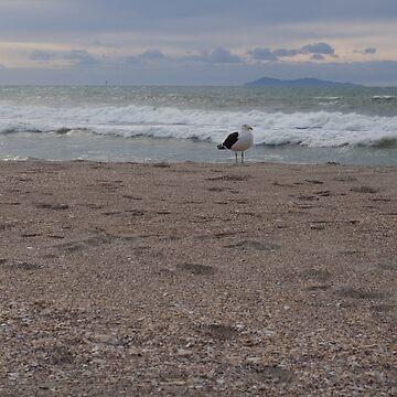 Beach Seagull by urbanfragments
