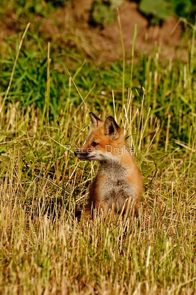 This is my best side!  Red fox kit - Ottawa, Ontario by Tracey  Dryka