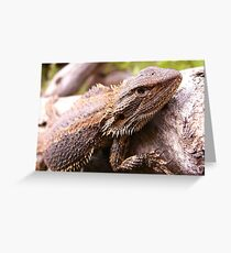 beardered Dragon close encounter Greeting Card
