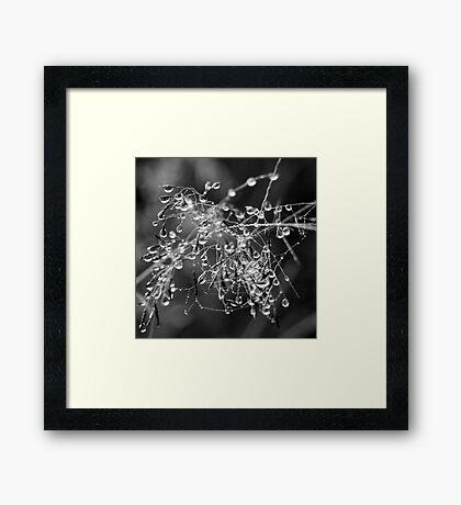 Beautiful Tangled Mess Framed Print