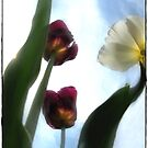 Three Tulips by Olga