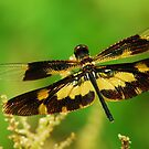 Golden Dragonfly - Nature and Wildlife Original photo graphic design Merchandise by VIDDAtees