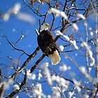 Eagle in snowy tree by Drgnfly4free