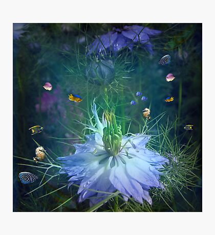 Underwater garden , or is it? Photographic Print