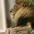 King of all Kings! by Tracey  Dryka