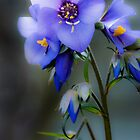 The colour of Blue by CJTill