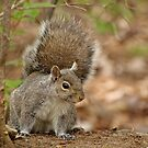 Waiting for the peanut to drop by Tracey  Dryka