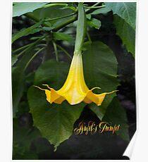 Angel's Trumpet Poster