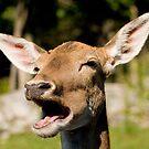 Blah Blah Blah!!! - Fallow deer by Tracey  Dryka