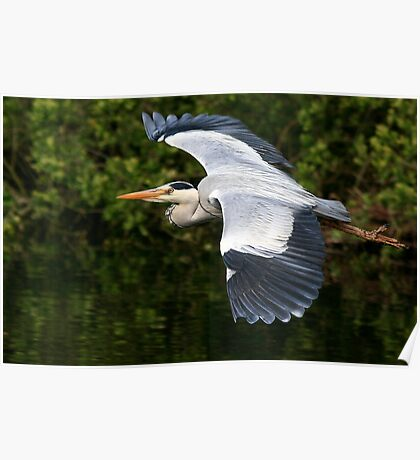 The Grey Heron Poster