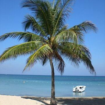 Palm by ashlint