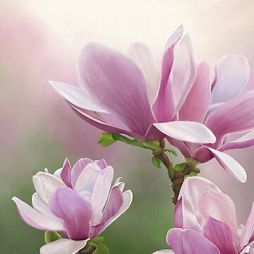 Magnolia flowers by TMU-cw